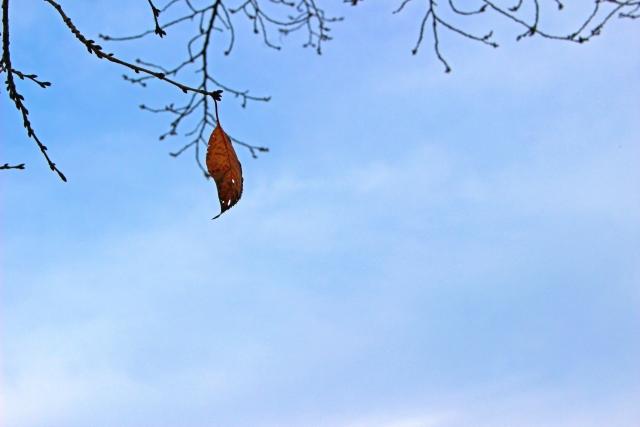 落ちそうな葉っぱ