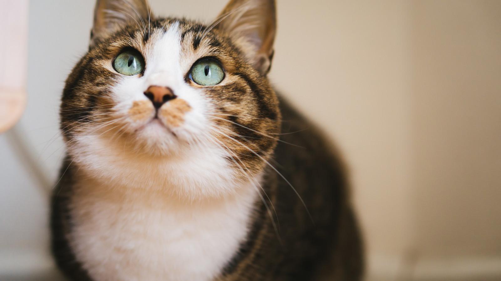 猫が興味深そうに見上げている