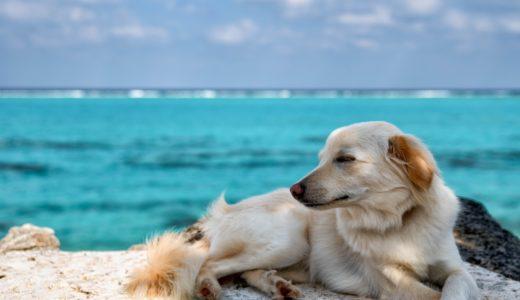 海外に犬を連れていく方法を徹底解説!出入国の条件・手続き・費用は?